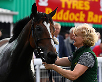 Exceeding Power is tended by his lass in the winners enclosure after winning The Total Decor Ltd Handicap,  during Ladies Evening Racing at Salisbury Racecourse on 15th July 2017