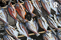 Drying fishes on on wire Fencing (Licence this image exclusively with Getty: http://www.gettyimages.com/detail/93187582 )