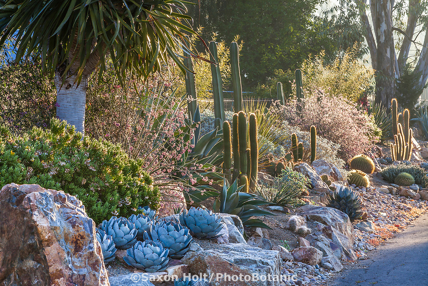 Front garden drought tolerant entry along street with cactus and succulents using rocks and gravel for good drainage; Patrick Anderson San Diego Garden