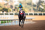 JAN 04: Desert Stone with Geovanni Franco win the San Gabriel Stakes at Santa Anita Park in Arcadia, California on January 01, 2020. Evers/Eclipse Sportswire/CSM