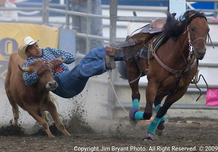 Darrell Petry, from Beaumont, TX., grabs ahold of a steer during the Steer Wrestling event at the Kitsap County Fair and Stampede  held Aug. 26 to Aug. 30, 2009 in Silverdale, WA.  Jim Bryant Photo. All Right Reserved. © 2009