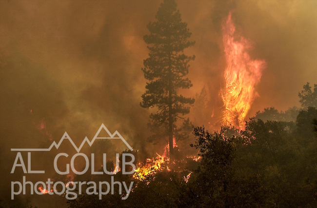 August 20, 2001 Coulterville, California  -- Creek Fire – Fire rages up Jackass Creek out of control. The Creek Fire burned 11,500 acres between Highway 49 and Priest-Coulterville Road a few miles north of Coulterville, California.