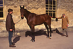 Brian Higham long serving Stud Groom at The Duke of Beaufort Badminton House estate. Morning inspection of the horses.