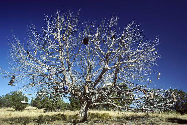 A dead tree serves as a repository for a variety of shoes that have been placed there by travelers passing through the area to Kodachrome Basin State Park and Grosvenor Arch. Kane County, UT.