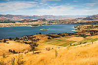 Lake Wanaka and its town as seen from Mt. Roy track and sheep, Central Otago, New Zealand