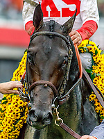 BALTIMORE, MD - MAY 20: Cloud Computing  #2, ridden by Javier Castellano, after winning the 142nd Preakness Stakes on Preakness Stakes Day at Pimlico Race Course on May 20, 2017 in Baltimore, Maryland. (Photo by Jesse Caris/Eclipse Sportswire/Getty Images)