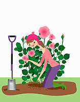 Woman planting rose bush in garden