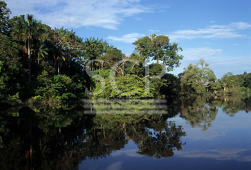 Anavilhanas, Amazon, Brazil. Trees of the flooded forest reflected in the river.