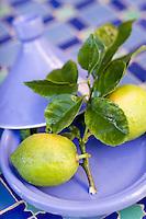 Afrique/Afrique du Nord/Maroc/Rabat: Hotel - Maison d'Hote Villa Mandarine - Plat a tajine et citrons