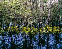 Swamp flowers and forest, St. Marks National Wildflife Refuge, Florida