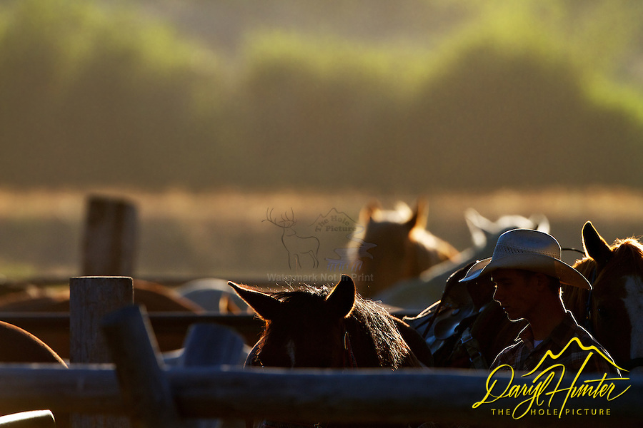 Backlit Cowboys, wranglers preparing the remuda