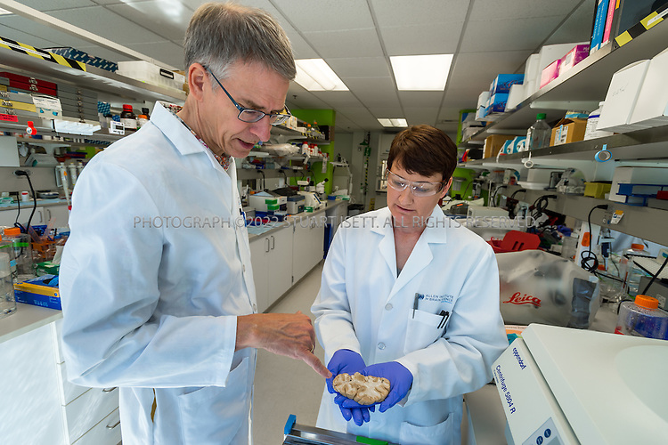 SEATTLE, USA - SEPTEMBER 16th, 2015<br /> <br /> Christof Koch (left) president and chief scientific officer works with senior research associate Julie Nyhus (right) at the  Allen Institute for Brain Science in Seattle, WASH., USA. Here Nyhus holds a slice of human brain being used in research.<br /> <br /> [SOURCE: WIKIPEDIA} The Allen Institute for Brain Science is a Seattle-based independent, nonprofit medical research organization dedicated to accelerating the understanding of how the human brain works. The Allen Institute promotes the advance of brain research by providing free data and tools to scientists worldwide with the aim of catalyzing discovery in disparate research programs and disease areas.<br /> <br /> Started with $100 million in seed money from philanthropist Paul Allen in 2003, the Institute tackles projects at the leading edge of science&mdash;far-reaching projects at the intersection of biology and technology. The resulting data create free, publicly available resources that fuel discovery for countless researchers<br /> <br /> (Photo by Stuart Isett for The Washington Post)