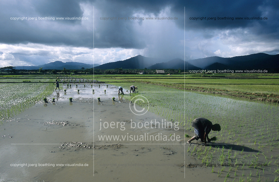 PHILIPPINES Palawan, farmer plant rice in field in front of mountains and cloudy sky / Philippinen Palawan, Landarbeiter pflanzen Reis vor Bergkulisse mit Gewitter Himmel