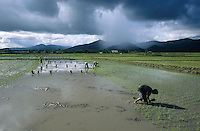PHILIPPINES Palawan, farmer plant rice in field in front of mountains and cloudy sky / Philippinen Palawan, Landarbeiter pflanzen Reis vor Bergkulisse mit Gewitter Himmel