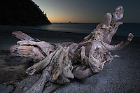Driftwood on beach at Smoothwater Bay near Jackson Bay after sunset, South Westland, West Coast, World Heritage Area, South Island, New Zealand