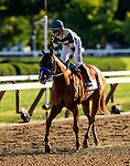 AUG 24: Much Gusto at the Travers Stakes races at Saratoga Racecourse in New York on August 24, 2019. Evers/Eclipse Sportswire/CSM