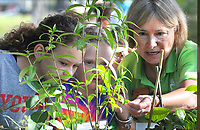 NWA Democrat-Gazette/DAVID GOTTSCHALK Emma Kate Wheat (from left) and Kenny Chambers, both third grade students at Bernice Young Elementary School, look at milkweed Thursday, October 4, 2018, with Sonya Zimmer, a volunteer at the Botanical Garden of the Ozarks, during Butterfly Days 2018 at the garden in Fayetteville. First through third grade students participated in the four day event that corresponded with science and biology curriculum at the school and featured  seven education stations about butterflies.