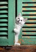 Xavier, ANIMALS, cats, photos+++++,SPCHCATS733B,#a# Katzen, gatos