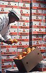 Fruit inspection, navel oranges, Weis Markets warehouse.