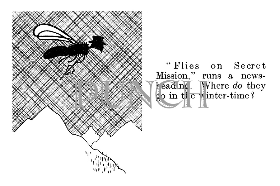 """Flies on secret mission,"" runs a news-heading. Where DO they go in the winter-time?"