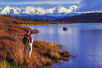 Autumn tundra and taiga, Wonder Lake, cow moose feeds as hiker observes, Alaska Range mountains, Denali National Park, Alaska.