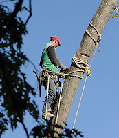 PULLEYS<br /> Arborist Uses Pulleys While Pruning A Tree<br /> When climbing trees, a pulley is used as a terminal anchor, a fair lead, a slack tender, and for gear hauling.
