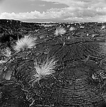 Swirled patterns of Pahoehoe Lava  as far as the eye can see.