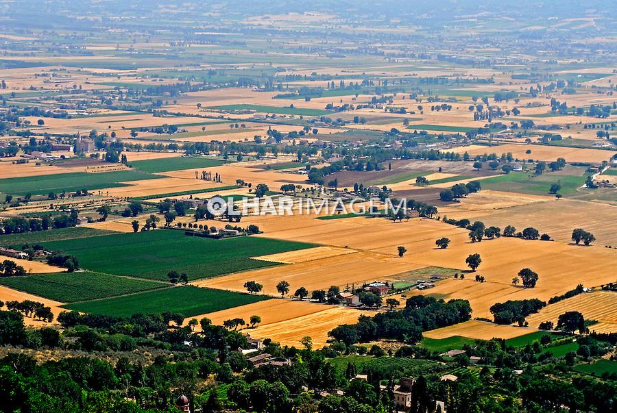 Plantação de trigo e vinhedos em Assis. Umbria. Itália. 2006.  Foto de Luciana Whitaker.