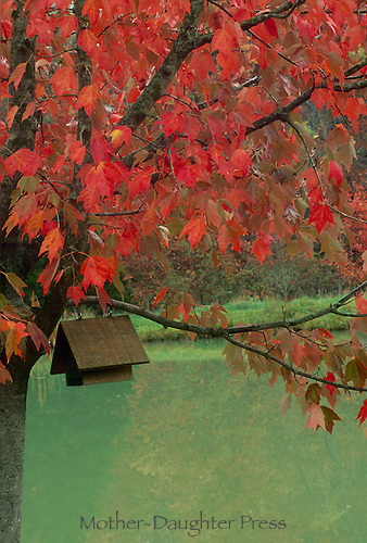A-frame birdhouse in red maple tree