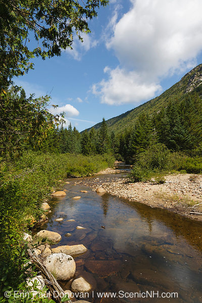 Whitewall Brook in Zealand Notch of the New Hampshire White Mountains during the summer months. This area was part of the Zealand Valley Railroad, which was a logging railroad in operation from 1884-1897.