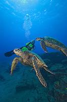 Green sea turtles, Chelonia mydas, and diver (MR).  Kauai, Hawaii.