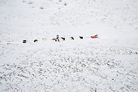 Aerial of Ramy Brooks stopped between Ophir and Iditarod snacking with dogs