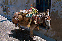 beladener Esel in Fira, Insel Santorin (Santorini), Griechenland, Europa