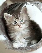 Marek, ANIMALS, REALISTISCHE TIERE, ANIMALES REALISTICOS, cats, photos+++++,PLMP2373,#a#