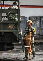 Militares y perros  pastor Aleman se encuentran en la zona cercana al edificio de la colonia Álvaro Obregón #286, donde se busca rescatar 46 personas con o sin vida, Ciudad de Mexico a  22 sep 2017.<br /> ( Foto: Luis Gutierrez/NortePhoto.com)<br /> <br /> •••• #sismo #terremoto #terremotoMexico #mexico #nortephoto #photojurnalism