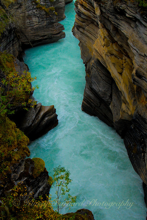 &quot;ATHABASCA SQUAW&quot;<br />