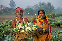 Vegetable farmer Geeta Devi (in orange), 45, a member of a Farmer's Producer Group, poses for a portrait with her husband and harvested cauliflower vegetables in her field in Machahi village, Muzaffarpur, Bihar, India on October 27th, 2016. Non-profit organisation Technoserve works with women vegetable farmers in Muzaffarpur, providing technical support in forward linkage, streamlining their business models and linking them directly to an international market through Electronic Trading Platforms. Photograph by Suzanne Lee for Technoserve