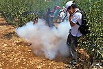 A concussion grenade thrown by Israeli soldiers detonates amongst activists & members of the press during a non-violent demonstration in the West Bank village of Beit Ummar near Hebron on 10/07/2010.
