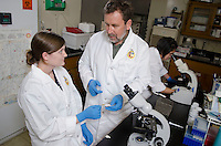 "CVM, summer research student, Jennifer Cain, class of 2016, with mentor Dr. David Smith examining InPouch test sample which can detect Tritrichomonas Foetus.  ""Trich"", is a sexually transmitted disease of cattle that causes reproductive failure. This research is testing the conditions that affect diagnostic performance."