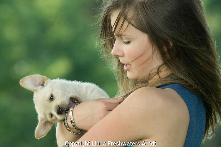 Yellow Labrador retriever (AKC) puppy biting teenage girl's wrist