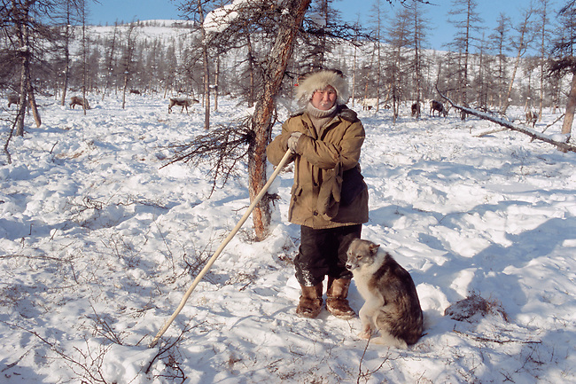 Even reindeer herder & his dog watch over the herd at their winter pastures. N. Evensk, Magadan Region, E. Siberia, Russia