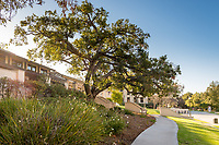 JSC Quad tree and bench outside the Tiger Cooler, March 28, 2018.  (Photo by Marc Campos, Occidental College Photographer)