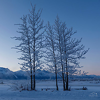 Winter landscape of frost and hoarfrost on trees along the bank of the Matanuska River with Pioneer Peak in the background in the Matanuska Valley near Palmer, Alaska. Chugach Mountains  Southcentral Alaska<br /> <br /> Photo by Jeff Schultz/SchultzPhoto.com  (C) 2019  ALL RIGHTS RESERVED