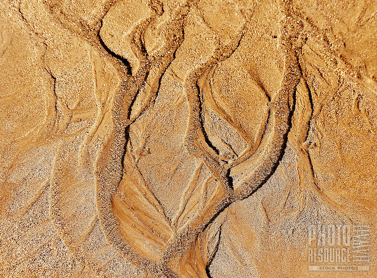 Diverse tracks of water erosion on sand conveys the concept of a tree in a sand forest, Waikiki Beach, O'ahu.