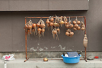 Bunches of drying onions during reconstruction efforts following the 311 Tohoku Tsunami in Ofunato, Japan  © LAN