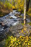 Autumn along Mill Creek, Lundy Canyon A creek runs along fallen golden, autumn leaves on the banks.
