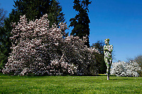 Nature Art: Magnolia tree bodypainting with model Daniela in a private park in Hasperde - Calendar sheet of the 'Nature Art Bodypainting in Landscpapes' calendar 2018 by the bodypaint artist Joerg Duesterwald and the photographer Tschiponnique Skupin