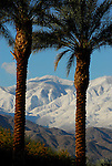 Date palms and San Jacinto Mountains