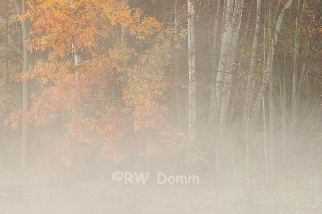 foggy pond in autumn