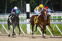 OLDSMAR, FL - JANUARY 21: Sonoma Crush #4 (yellow cap), ridden by Daniel Centeno, leads the pack down the final stretch, and wins the 4yr olds and up #1 claiming race, on Skyway Festival Day at Tampa Bay Downs on January 21, 2017 in Oldsmar, Florida. (Photo by Douglas DeFelice/Eclipse Sportswire/Getty Images)